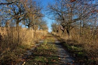 Spazierweg im neuen Stadtteil Hubland.