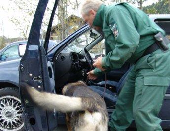 Drogenspürhund - Symbolbild Polizeiarbeit (Foto: Polizei)