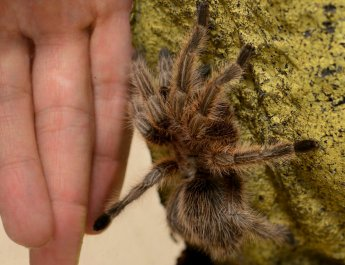 Weitere Studienteilnehmer/innen mit Angst vor Spinnen gesucht