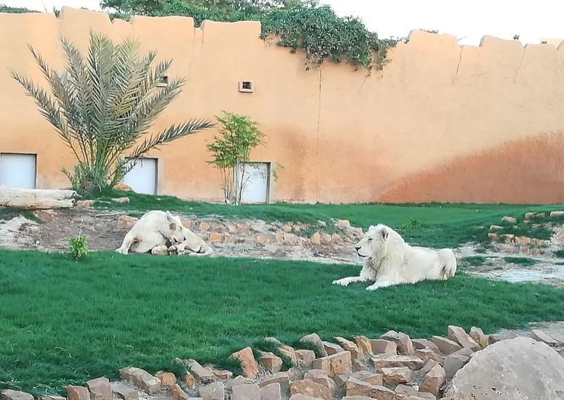 حديقه الحيوان الرياض افضل حدائق لعام 2021 وجهات