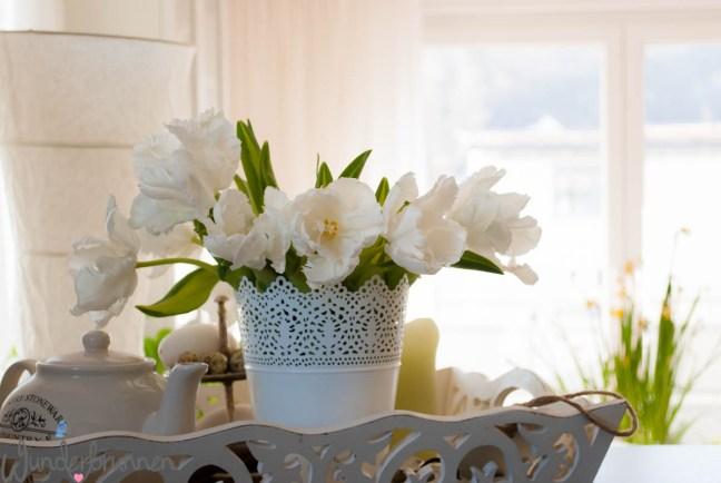 Weiße Tulpen - Wunderbrunnen - Foodblog - Fotografie