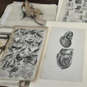 Vintage e pezzi da collezione - Vintage and collectibles
