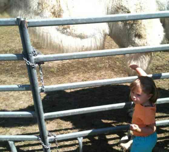 Zirkus Knie - Zoo Besuch