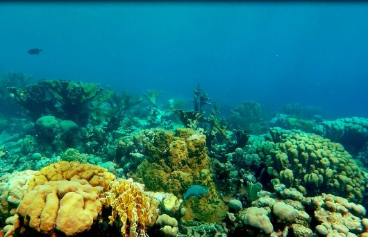 Reef to the north of Bonaire, October 2016. Photo credits: Didier de Bakker