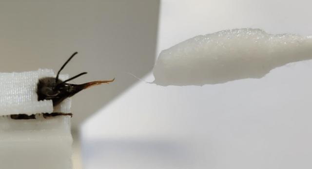Training bees to smell the coronavirus