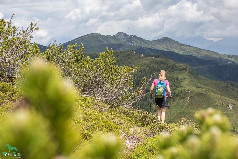 Moseregg in Kleinarl ist ein ruhiger Gipfel.