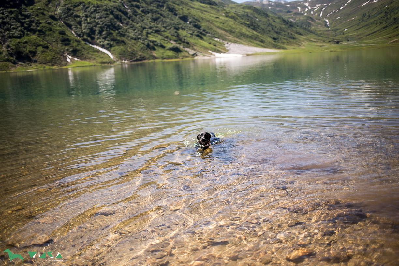 Luke schwimmt im Tappenkarsee