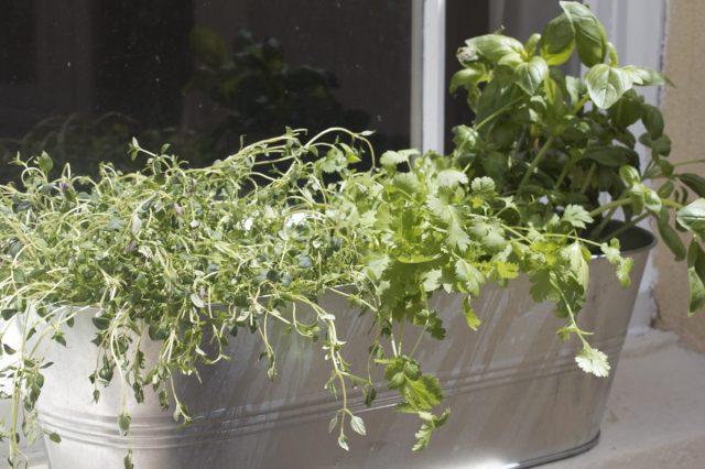 wuthering, bites, herb, garden
