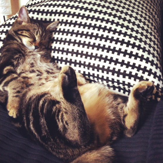 cat, cute, sleeping