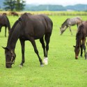 Humane Society Rescues Thoroughbreds