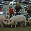 Meade County Fair  Swine Show Results