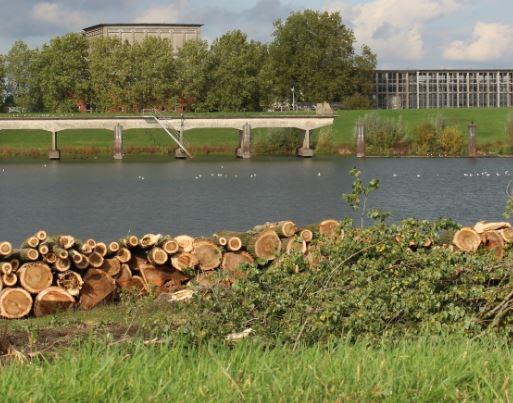 De populieren bij de IJsselcentrale Zwolle Zuid zijn de afgelopen week gekapt