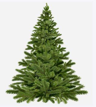 'Oude bomen vangen veel winst!' Inleveren oude Kerstbomen in Zwolle Zuid levert geld op…