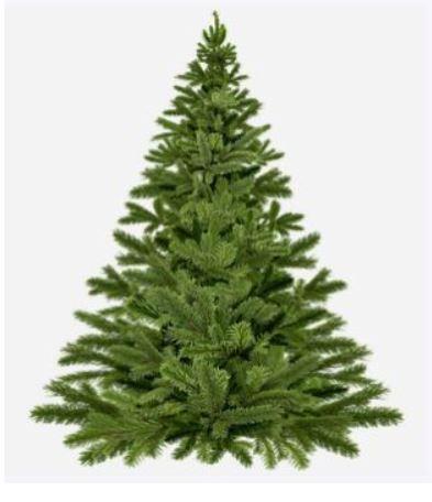'Oude bomen vangen veel winst!' Ook kinderen uit Zwolle Zuid hebben oude Kerstbomen ingeleverd