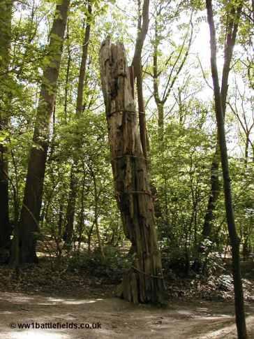 Shell-blasted tree at Sanctuary Wood