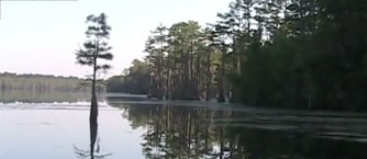 600x261 Trees, in Stills from Video, by Bret Wagenhorst, May 2009