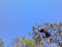 640x480 Movie: Soaring birds, in Lewis lake, by John S. Quarterman, for WWALS.net, 17 May 2014