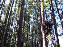 640x480 Movie: Under the nests, in Lewis lake, by John S. Quarterman, for WWALS.net, 17 May 2014