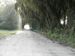 960x720 canopy road near Jennings Bluff, FL, in Alapaha, by Bret Wagenhorst, 1 September 2014