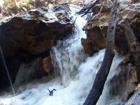 720x540 Waterfall, in Alapaha River Sink, by Deanna Mericle, for WWALS.net, 11 November 2014