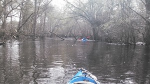 300x169 Paddle, in Alapaha deadfalls, by John S. Quarterman, for WWALS.net, 17 January 2015