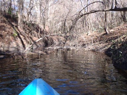 2048x1536 Narrow, in Alapaha River at Statenville, January 2014 WWALS Outing, by Gretchen Quarterman, 18 January 2014