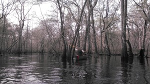 300x169 Bret on the phone, in Alapaha deadfalls, by John S. Quarterman, for WWALS.net, 17 January 2015