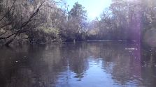 1280x720 Movie: Sunny day (20M), in Alapaha River at Statenville, January 2014 WWALS Outing, by Gretchen Quarterman, 18 January 2014