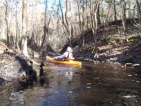 4288x3216 Creek side, in Alapaha River at Statenville, January 2014 WWALS Outing, by Gretchen Quarterman, 18 January 2014