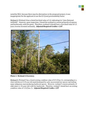 300x388 Wetland 4 Overstory, in RE: SAS-2014-00862, Proposed U.S. Highway 84 Widening, by Gilbert B. Rogers, for WWALS.net, 28 May 2015