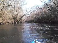 640x480 Movie: MOL094 (3.7M), in Statenville to Sasser Landing on the Alapaha River, by John S. Quarterman, for WWALS.net, 15 February 2015