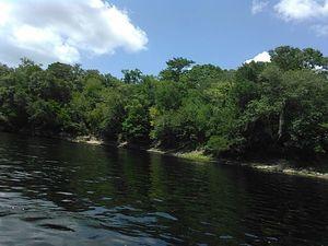 Left bank Suwannee River 30.3917236, -83.1683578