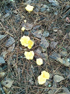 Mushrooms 30.8878364, -83.3230591
