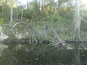 Fallen girders of Belleville Bridge, Hamilton County side 30.5956020, -83.2597732