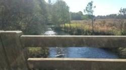 S. from Little Creek Bridge, Coffee Road, 30.9189600, -83.5949850
