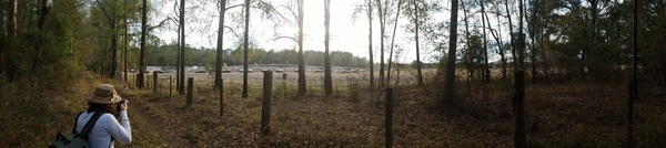 Panorama, Sabal Trail pipe going into ground, Hamilton County,