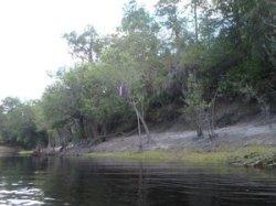 Buoy in tree 30.5175867, -82.7183850