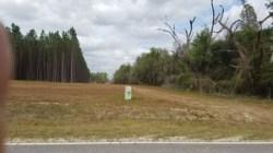 Pipeline cut through woods, n. of CR 132, 30.3918246, -83.1529981