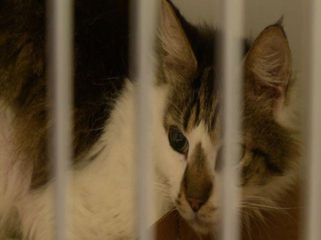 cat house_355874