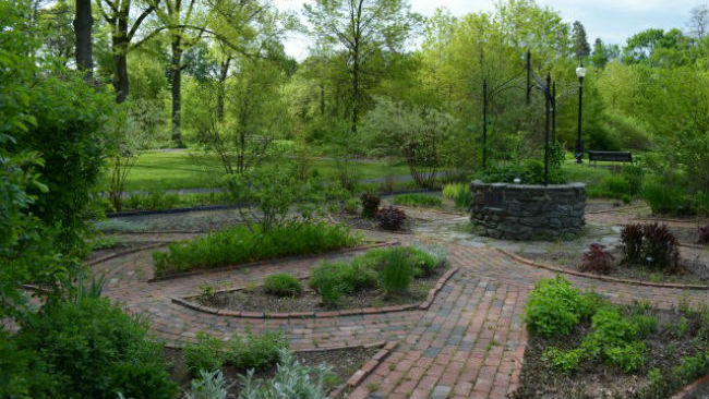 Grandmother's Garden_437260