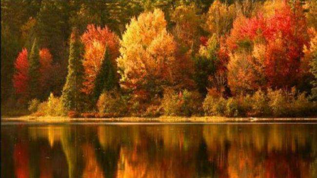 fall leaves_470028