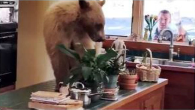 hungry bear_1525555916917.JPG.jpg