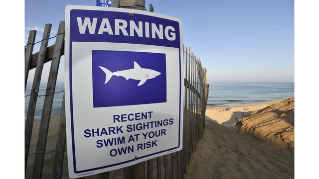 Shark Attack_1534668530191