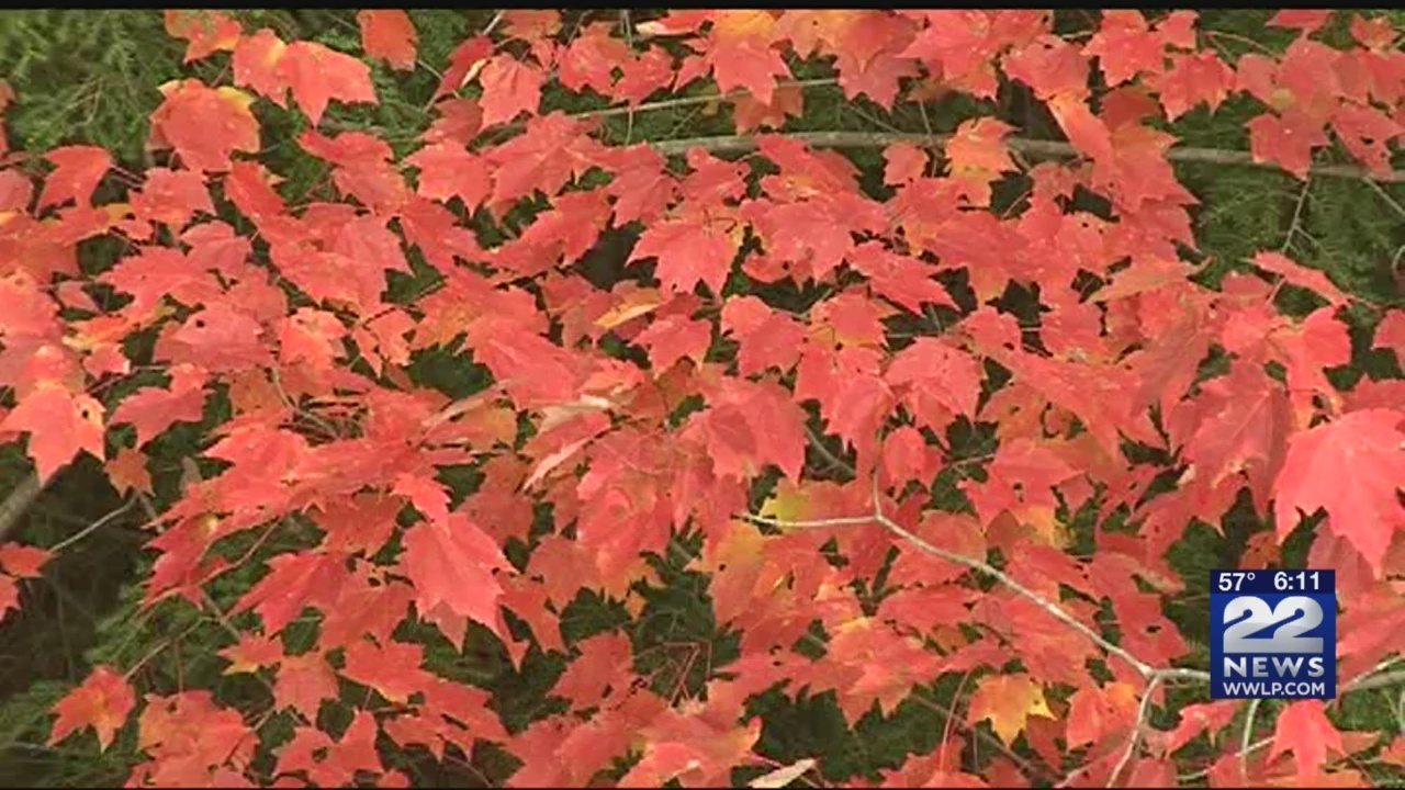 It_s_peak_fall_foliage_season_in_Frankli_0_20181023230235
