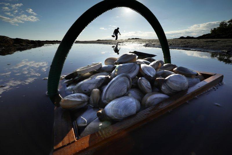 Shellfish aiding predators ruining habitat_1541948998686.jpeg.jpg