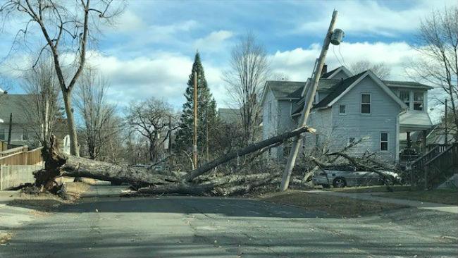 West Springfield Tree