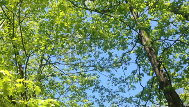 trees tree pollen_618960
