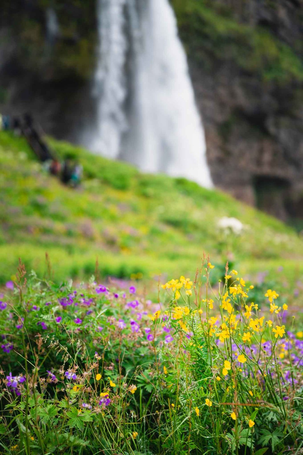 Seljalandsfoss | Iceland | Walk Behind Waterfalls