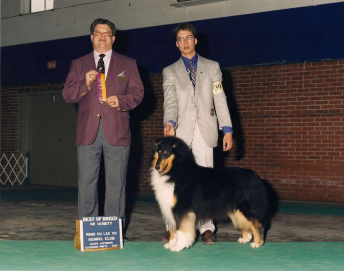 Tri-Color Collie - Ch. Wyndlair Midnight Audition