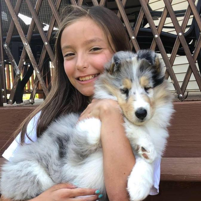 Blue Merle Collie Puppy with Little Girl Holding